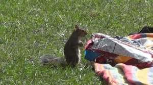 squirrelstealingchips