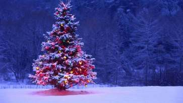 christmastreesnow